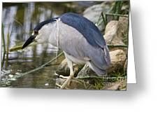 Black-crown Heron Going Fishing Greeting Card
