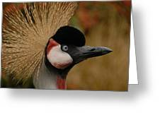 Black Crowned Crane Greeting Card