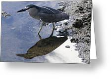 Black Crowned Night Heron And Shadow Greeting Card