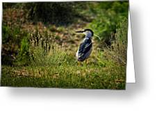 Black-crowned Night Heron At Carson Lake Wetlands Greeting Card