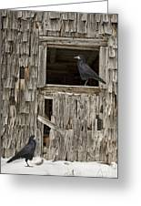 Black Crows At The Old Barn Greeting Card