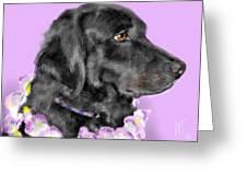 Black Dog Pretty In Lavender Greeting Card