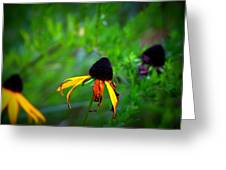 Black Eye Susans Greeting Card