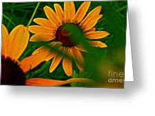 Black Eye Susans Greeting Card by Brittany Perez