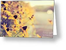 Black-eyed Beauties Greeting Card