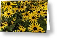 Black-eyed Susan - Rudbeckia Hirta  Greeting Card