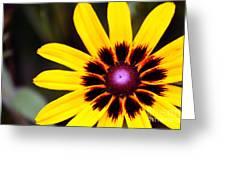 Black Eyed Susan 3 Greeting Card