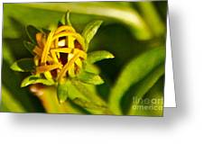 Black Eyed Susan Bud Greeting Card