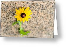 Black-eyed Susan Flower On A Gneiss Rock Greeting Card
