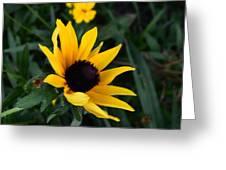 Black-eyed Susan Glows With Cheer Greeting Card