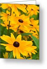 Black Eyed Susan - Flower Greeting Card