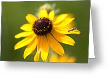 Black-eyed Susan With Friend Greeting Card