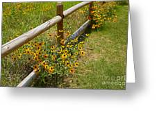 Black Eyed Susans In A Wildflower Meadow Greeting Card