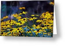 Black-eyed Susans Greeting Card