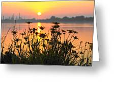 Black-eyed Susans Sunrise Greeting Card