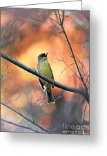 Black-faced Bunting Greeting Card