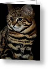 Black-footed Cat Greeting Card