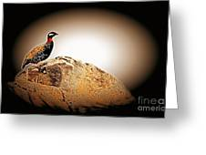 Black Francolin Greeting Card