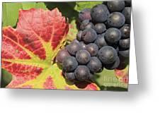 Black Grapes Greeting Card