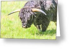 Black Highland Cattle Bull Greeting Card