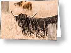 Black Highland Cow Greeting Card