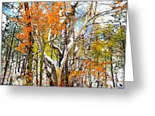Black Hills Entanglement Greeting Card