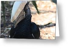 Black Hornbill Greeting Card