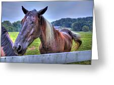 Black Horse At A Fence Greeting Card