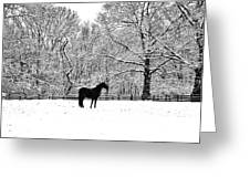 Black Horse In The Snow Greeting Card