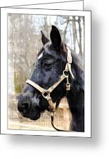 Black Horse Greeting Card by Susan Leggett