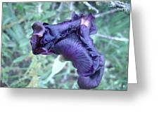 Black Iris Closeup Greeting Card