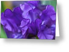 Black Iris Up Close Greeting Card