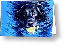 Black Lab  Blue Wake Greeting Card by Molly Poole