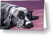 Black Labrador Beauty Sleep Greeting Card