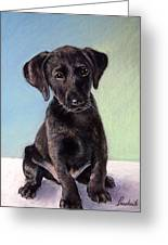 Black Labrador Puppy Greeting Card by Prashant Shah