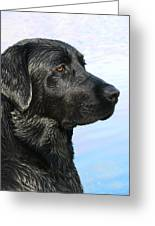 Black Labrador Retriever After The Swim Greeting Card