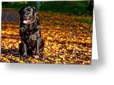 Black Labrador Retriever In Autumn Forest Greeting Card