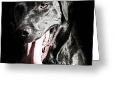 Black Labrador Retriever Greeting Card by Paulina Szajek