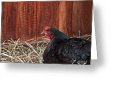Black Laying Hen On Nest Art Prints Greeting Card