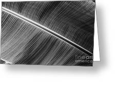 Black Lines Greeting Card