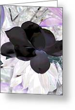 Black Magnolia Greeting Card