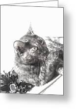 Black N White Cat Greeting Card