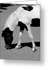 Black N White Horse Greeting Card