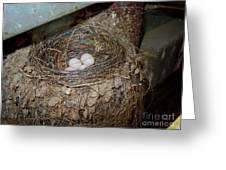 Black Phoebe Nest With Eggs Greeting Card