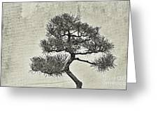 Black Pine Bonsai In Monochrome Greeting Card