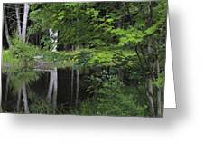 Black Pond And Maple Greeting Card by Colleen Williams
