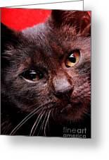 Black Puppy Cat Greeting Card