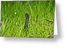 Black Racer Back Greeting Card by Al Powell Photography USA
