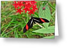 Black Red And White Butterfly Greeting Card