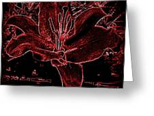 Black Red Lilly Greeting Card